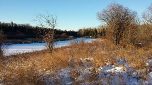 Trapping near a water source is usually profitable.