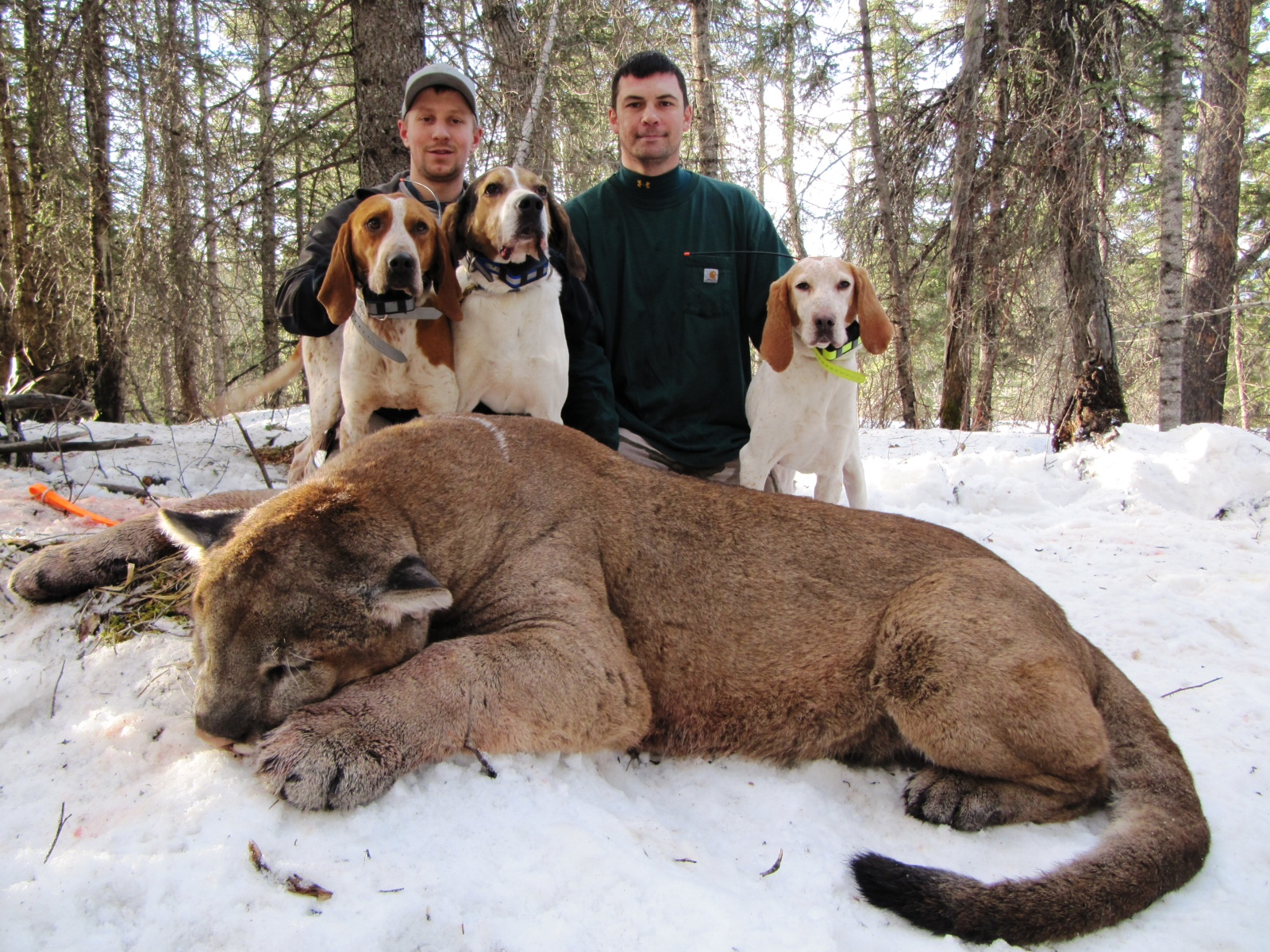 Hunting Dogs For Sale In West Virginia
